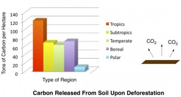 Carbon Cycle - Carbon Released from Deforestation of Different Biomes