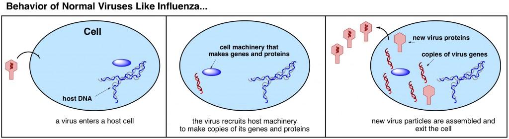 how do viruses work
