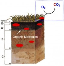 Oxidation of Organic Molecules in Soil