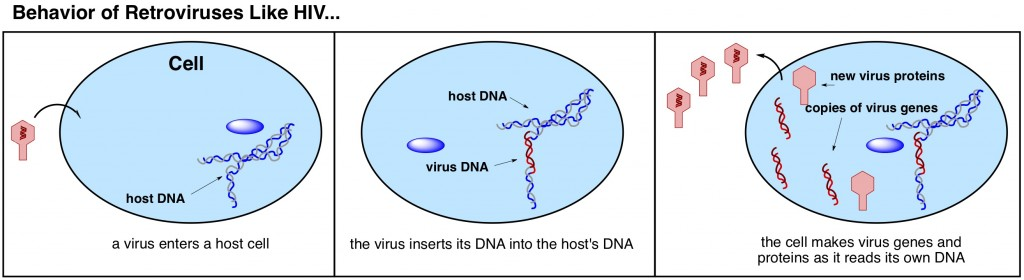 how do retroviruses work