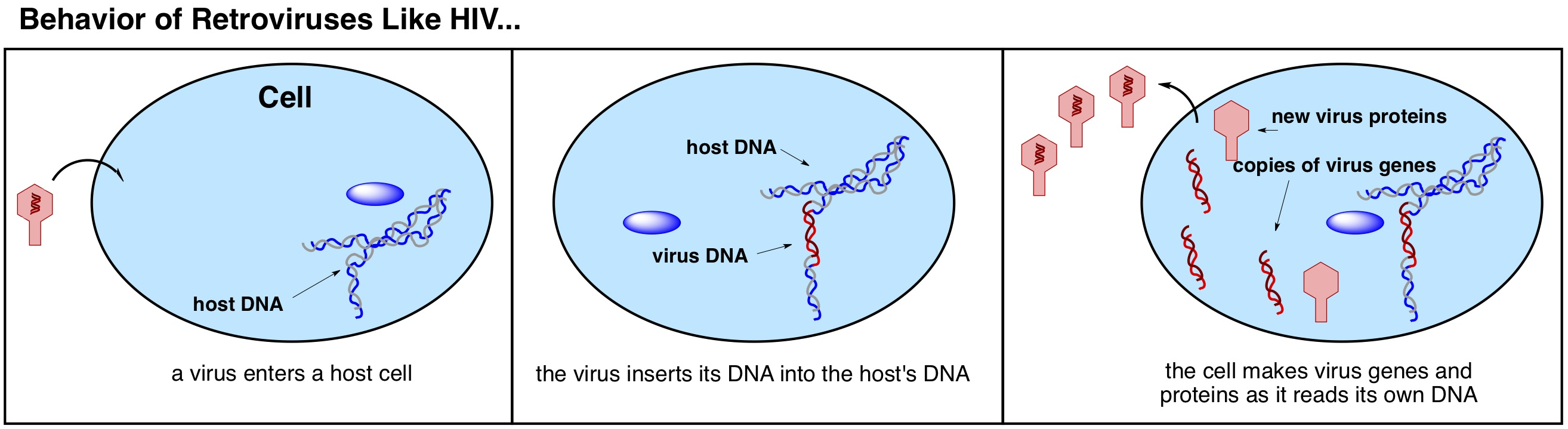 virus definition biologie