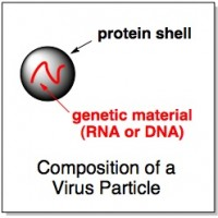 virus protein and rna what is a virus made of