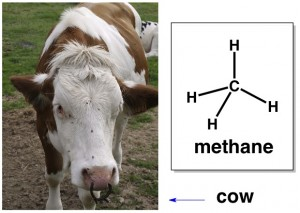 methane greenhouse gas cows