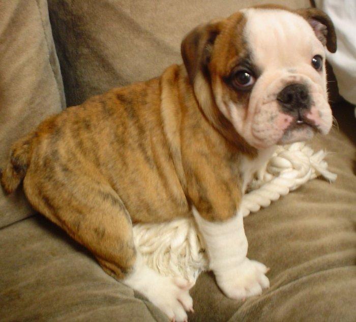 puppy patch