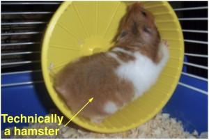 Alzheimers Drugs Hippocampus Neurogenesis Mice