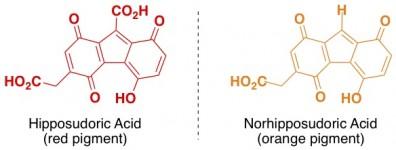 hippo sunscreen hipposudoric acid norhipposudoric acid