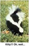 skunk spray thiols chemistry