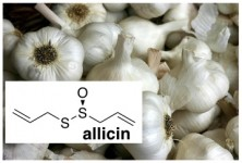 garlic odor allicin