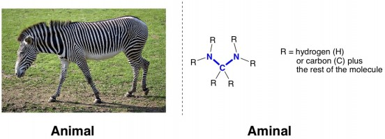 metathesis animal aminal