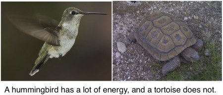 hummingbirds high energy tortoises low energy activation barriers
