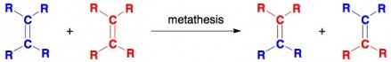 olefin metathesis aminal animal