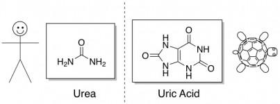 tortoises reptiles uric acid urea