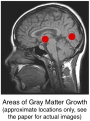 color names increase gray matter volume