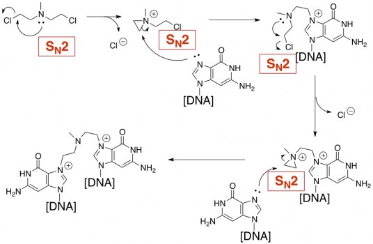 HN2 nitrogen mustard SN2 dna alkylation